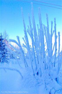 blå_vinter m navn.jpg-for-web-normal